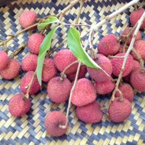 宜野湾市 比嘉秀人さんの自然栽培の茘枝(ライチ)が入荷しました! 今シーズン最後です。お電話頂ければおとり置きも致します。 ☎098-943-9575