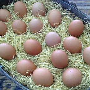 山口県 秋川牧園の卵・鶏肉が入荷しました!お弁当にも便利なチキンナゲット・鳥天・フライドチキンも入荷です。エサは全てNON-GMOの植物性で、トウモロコシはポストハーベストフリー。また、定期的に卵とエサの放射能検査を行っています。卵はバラ売りで販売しますので、できましたら卵ケースをご持参下さい!  秋川牧園の卵の黄身は自然な黄色。卵臭さもないので卵かけご飯でも美味しいです。