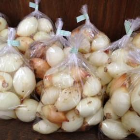 6/27(mon)本日の仕入れです。  うるま市 玉城勉さんの自然栽培の玉ねぎが入荷しました!