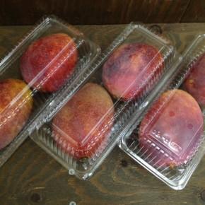 7/21(thu)本日の仕入れです。  南風原町 アツオさんのアップルマンゴーが初入荷しました!   農薬は1月に一度だけ使用、ほぼ肥料も使っていない稀少なマンゴーです。※クリックしていただくと畑の写真もご覧になれます。