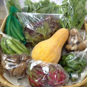 【第34回目】わが家のハルラボ商店『お野菜おまかせBOX』は本日9/28(wed)まで受付中!10/1(sat)発送。今回は自然栽培のシークワーサーや無農薬栽培の里芋をセット予定。受付はお電話にて承ります。☎098-943-9575(詳細はコチラをクリック)※写真は前回の野菜BOXです。