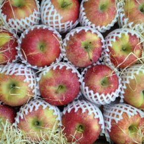 ご好評いただいている山口県産 低農薬りんご「ふじ」が再入荷しました!