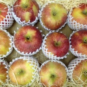 お待たせしました!毎年恒例、山口県からもぎたての低農薬りんごが入荷しました!!今回は「秋映」ローズパル」「秋陽」「紅将軍」。どれも味が乗っていて美味しいですよ。