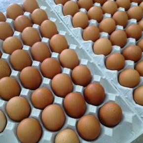 山口県 秋川牧園の卵・鶏肉、お弁当にも便利なチキンナゲット・鳥天・フライドチキンも入荷しました!エサは全てNON-GMOの植物性で、トウモロコシはポストハーベストフリー。また、定期的に卵とエサの放射能検査を行っています。卵はバラ売りで販売しますので、できましたら卵ケースをご持参下さい! 秋川牧園の卵の黄身は自然な黄色。卵臭さもないので卵かけご飯でも美味しいです。