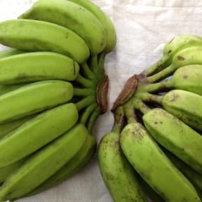 久しぶりに、うるま市 玉城勉さんの自然栽培の島バナナが入荷しました!