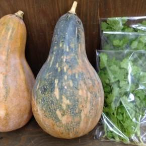 12/1(thu)本日の仕入れです。  糸満市 金城聡さんの無農薬栽培の島かぼちゃ・パクチー、が入荷しました!