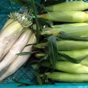 12/3(sat)本日の仕入れです。  八重瀬町 島袋悟さんの自然栽培のトウモロコシ・大根、が入荷しました!  島袋さんのトウモロコシ、今年も甘さは保証付き!!