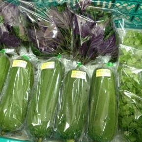 12/3(sat)本日の仕入れです。  糸満市 金城聡さんの無農薬栽培のサラダヘチマ・パクチー・ハンダマ、が入荷しました!