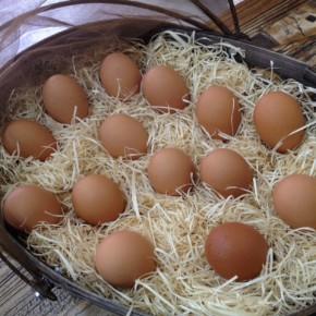 山口県 秋川牧園の卵・鶏肉・黒豚肉が入荷しました!エサは全てNON-GMOの植物性で、トウモロコシはポストハーベストフリー。また、定期的に卵とエサの放射能検査を行っています。卵はバラ売りで販売しますので、できましたら卵ケースをご持参下さい。 秋川牧園の卵の黄身は自然な黄色。卵臭さもないので卵かけご飯でも美味しいです。