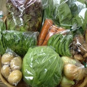 【第44回目】わが家のハルラボ商店『お野菜おまかせBOX』は本日2/22(wed)まで受付中!2/25(sat)発送。受付はお電話にて承ります。☎098-943-9575(詳細はコチラをクリック)※写真は前回の野菜BOXです。