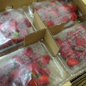 国頭村から森岡さんの朝摘みイチゴが到着!お取り置き承ります。