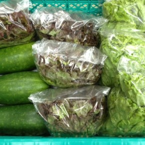 2/23(thu)本日の仕入れです。  糸満市 中村一敬さんの自然栽培のサニーレタス・グリーンリーフ・冬瓜、が入荷しました!