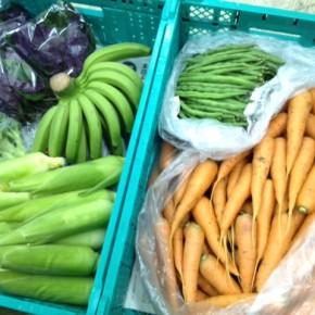 2/23(thu)本日の仕入れです。  八重瀬町 島袋悟さんの自然栽培の人参・ブロッコリー・インゲン・とうもろこし・バナナ、糸満市 金城聡さんの無農薬栽培のハンダマ、が入荷しました!