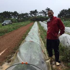 昨日は仕入れも兼ねて、大宜味村 奈良さんの畑へお邪魔してきました。  昨日の大雨は久しぶりに畑に栄養を与えてくれたようです。  写真の畑は今シーズン沢山仕入れさせていただいたキャベツ畑。  収穫時期を少しずつずらしていて5月に入ってからまた出てくる予定です。(クリックで他の写真もご覧頂けます)