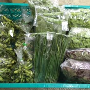 5/25(thu)本日の仕入れです。  糸満市 中村一敬さんの自然栽培の枝豆・にら・山ほうれん草・サニーレタス・グリーンリーフ、が入荷しました!