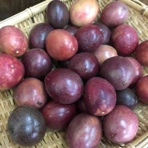 4/28(sat)本日の仕入れです。  八重瀬町 白川ファームさんの無農薬栽培のパッションフルーツが入荷しました!