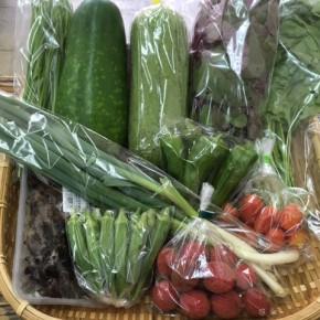 【第52回目】わが家のハルラボ商店『お野菜おまかせBOX』は先週土曜日に発送いたしました。今回の内容は自然栽培のアマランサス・冬瓜・角オクラ・にら・ミニトマト、  無農薬栽培の山ほうれん草・九条ネギ・ピーマン・サラダヘチマ・ライチ・きくらげ、をお送り致しました。次回受付は7/3(mon)~お電話にて承ります。☎098-943-9575(詳細はコチラをクリック)