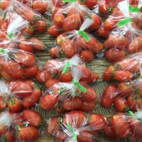 6/26(mon)本日の仕入れです。  うるま市 玉城勉さんの自然栽培のミニトマト、が入荷しました!