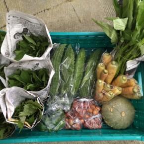 今帰仁村 片岡さんの無農薬栽培のゴーヤー・カボチャ・人参・ウンチェバー・青しそ・モロヘイヤ・ピーマン・ミニトマト、が入荷しました!