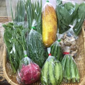 【第55回目】わが家のハルラボ商店『お野菜おまかせBOX』は本日7/31(mon)8/1(tue)2(wed)予約受付中!8/5(sat)発送。受付はお電話にて承ります。☎098-943-9575(詳細はコチラをクリック)