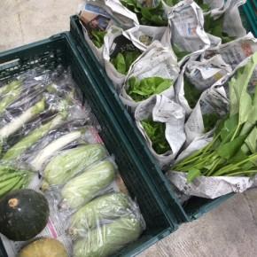 本日7/31(mon)15時、今帰仁村 片岡さんの無農薬栽培のサラダ菜・青しそ・サラダヘチマ・なすび・かぼちゃ・ウンチェバー・モロヘイヤ・ツルムラサキ・オクラ、が入荷します。