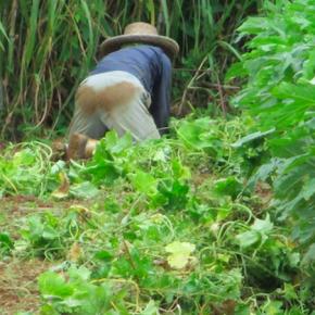 毎週月曜日に出荷して頂いている片岡農園さんの「ハルサー便り+β版 8月号」がアップされました。コチラをコピペしてご覧下さい。→http://www.ima-coma.com/harusah/kataoka-nouen.html