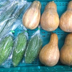 8/1(tue)本日の仕入れです。  糸満市 中村一敬さんの自然栽培の島かぼちゃ・無農薬栽培のアバシゴーヤー・青ネギ、が入荷しました!