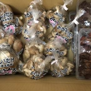 8/4(fri)本日の入荷です。  やんばる産おがくずで菌床栽培された生椎茸とキクラゲ、が到着しました!!