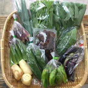 【第55回目】わが家のハルラボ商店『お野菜おまかせBOX』は先週土曜日に発送いたしました。今回の内容は自然栽培の蓮根・赤オクラ・丸オクラ・きゅうり・なす、  無農薬栽培のアバシゴーヤー・ねぎ・・モロヘイヤ・ツルムラサキ・ピーマン・きくらげ、をお送り致しました。次回受付は8/14(mon)・15(tue)・16(wed)お電話にて承ります。☎098-943-9575(詳細はコチラをクリック)