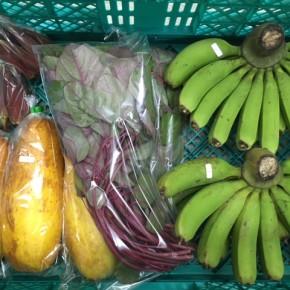 8/8(tue)本日の仕入れです。  八重瀬町 島袋悟さんの自然栽培のプチバナナ・モーウィ、糸満市 中村一敬さんの自然栽培の赤オクラ・無農薬栽培のアマランサス、が入荷しました!