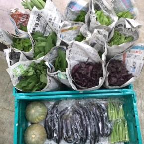 本日8/7(mon)15時、今帰仁村 片岡さんの無農薬栽培のサラダ菜・青しそ・赤しそ・なすび・かぼちゃ・ウンチェバー・モロヘイヤ・ツルムラサキ・オクラ、が入荷します。