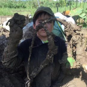 【沖縄れんこん物語⑲】  8月一杯の企画ではありますが収穫体験を実施しています。  最初は田んぼに入るのをためらいつつも、入ってしまえばみんな泥んこまみれ。  しかも探り当ててからが、またまたお楽しみ!  結構集中して時間が経つのを忘れてしまいます。  なんといってもお母さん公認の泥遊び!!蓮根の生態を知り、夏休みの自由研究にもなりそうです。