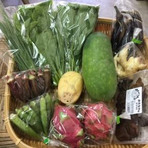【第57回目】わが家のハルラボ商店『お野菜おまかせBOX』は本日9/11(mon)・12(tue)・13(wed)約受付中!9/16(sat)発送。受付はお電話にて承ります。☎098-943-9575(詳細はコチラをクリック)※写真は前回の野菜BOXです。