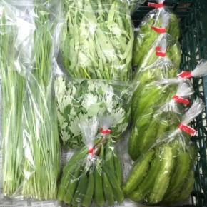 9/29(fri)本日の仕入れです。  北中城村ソルファコミュニティさんの自然栽培のヨモギ・にら・角オクラ・エンサイ・オクラ・うりずん豆、が入荷しました!