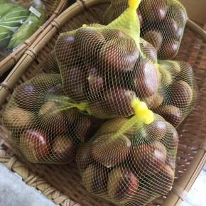 今年もご好評頂きました大分県産 無農薬栽培の栗。今回が今年最後の入荷になります。