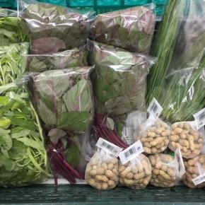 10/5(thu)本日の仕入れです。  糸満市 中村一敬さんの自然栽培のにら・無農薬栽培の白エンサイ・落花生・アマランサス、が入荷しました!