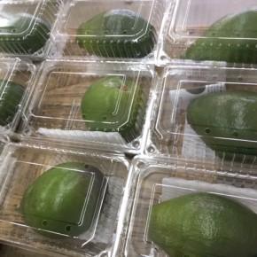 10/14(sat)沖縄県産の無農薬栽培のアボカドが再々入荷しました!  今年は収量が少なく、本土への発送を控えたため例年より多く分けて頂いています。  状況によってですが、来週も入荷できるかもしれません。