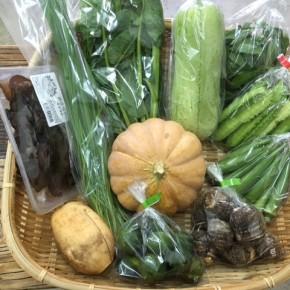 【第60回目】わが家のハルラボ商店『お野菜おまかせBOX』は先週土曜日に発送いたしました。今回の内容は自然栽培のうりずん豆・モロヘイヤ・にら・丸オクラ・島かぼちゃ・れんこん・シークワーサー、  無農薬栽培のサラダヘチマ・ツルムラサキ・里芋・キクラゲ、をお送り致しました。次回受付は10/23(mon)・24(tue)・25(wed)お電話にて承ります。☎098-943-9575(詳細はコチラをクリック)