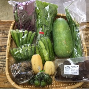【第59回目】わが家のハルラボ商店『お野菜おまかせBOX』は先週土曜日に発送いたしました。今回の内容は自然栽培のうりずん豆・角オクラ・にら・冬瓜・丸オクラ・れんこん、  無農薬栽培のアマランサス・ツルムラサキ・里芋・シークワーサー・キクラゲ、をお送り致しました。次回受付は10/10(tue)・11(wed)お電話にて承ります。☎098-943-9575(詳細はコチラをクリック)