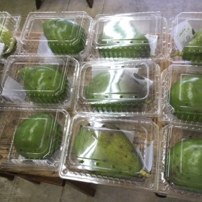 例年ご好評いただいている、沖縄県産の無農薬栽培のアボカドが入荷しました!  ご予約いただいているお客様からご案内させて頂きます。とっても大きいので食べ応え充分あります。