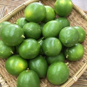 那覇市首里で無農薬栽培されたレモンが入荷しました!