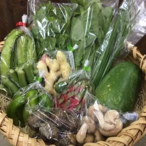 【第61回目】わが家のハルラボ商店『お野菜おまかせBOX』今回は台風接近のため通常土曜日の発送を前倒しで金曜日に発送いたしました。今回の内容は自然栽培の冬瓜・うりずん豆・にら・丸オクラ、  無農薬栽培の里芋・ピーマン・新生姜・ツルムラサキ・生しいたけ・ドラゴンフルーツ、をお送り致しました。次回受付は11/6(mon)・7(tue)・8(wed)お電話にて承ります。☎098-943-9575(詳細はコチラをクリック)