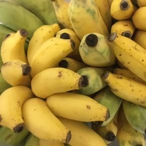 11/27(mon)本日の入荷です。  うるま市 玉城勉さんの自然栽培の銀バナナ・島バナナが入荷しました!