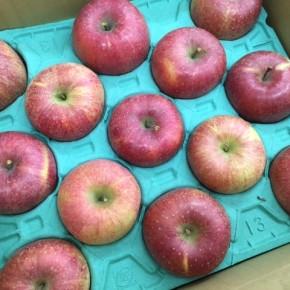 12/4(mon)本日の入荷です。  ご好評いただいている、山口県産 減農薬りんご再入荷しました!