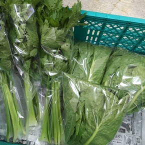 12/12(tue)本日の仕入れです。  糸満市 中村一敬さんの自然栽培のロメインレタス・セロリ・冬瓜が入荷しました!