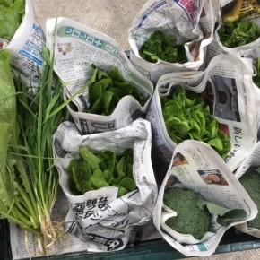 今帰仁村 片岡農園さんの無農薬栽培のブロッコリー・にんにく葉・サラダ菜・ほうれん草・間引き島大根・パクチーが入荷しました!