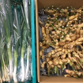 12/7(thu)本日の入荷です。  マサヨさんの無農薬栽培の長ねぎ・小ねぎが初入荷しました!  他、ご好評いただいているマサヨさんの無農薬栽培の新生姜も入荷しました!