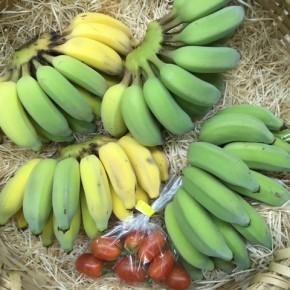 12/8(fri)本日の入荷です。  うるま市 玉城勉さんの自然栽培の銀バナナ・ミニトマトが入荷しました!  そろそろミニトマトが出始めそうです。