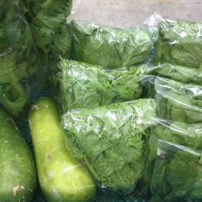 12/5(tue)本日の仕入れです。 糸満市 中村一敬さんの自然栽培のロメインレタス・グリーンリーフ・セロリ・冬瓜・無農薬栽培のほうれん草、が入荷しました!