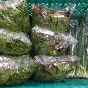 1/6(sat)本日の仕入れです。  糸満市 中村一敬さんの自然栽培のサニーレタス・グリーンリーフ・無農薬栽培の青ネギが入荷しました!